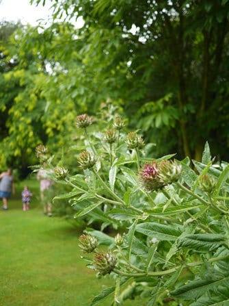 thistle-country-garden-shropshire-9