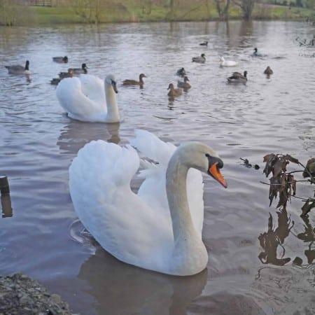 Ordinary Moments – Feeding the Ducks