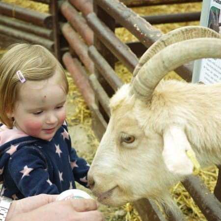 Hatton Country World, Warwickshire – Review