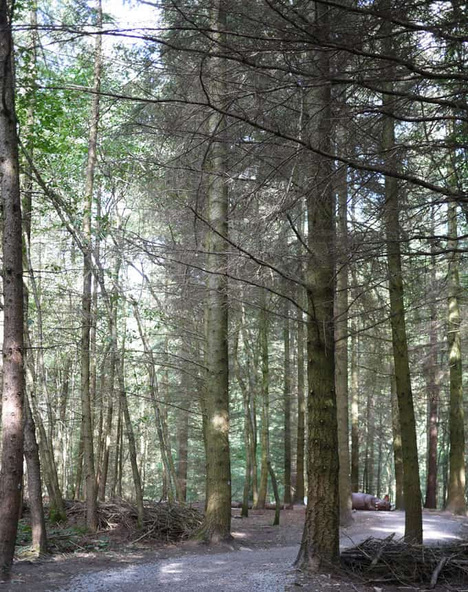 The Wyre Forest Gruffalo Trail