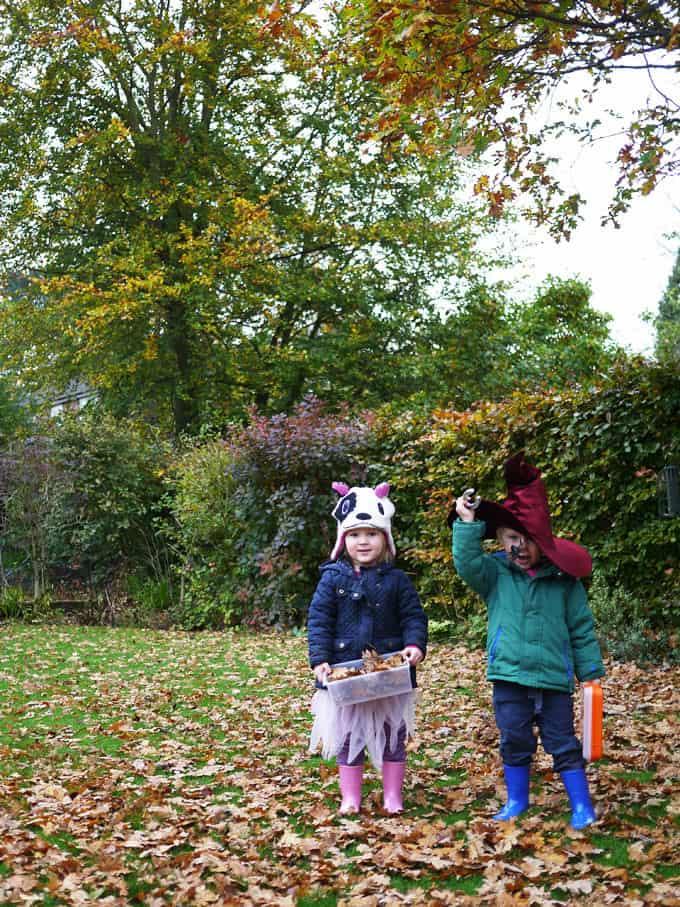 Autumn Leaf Choosing