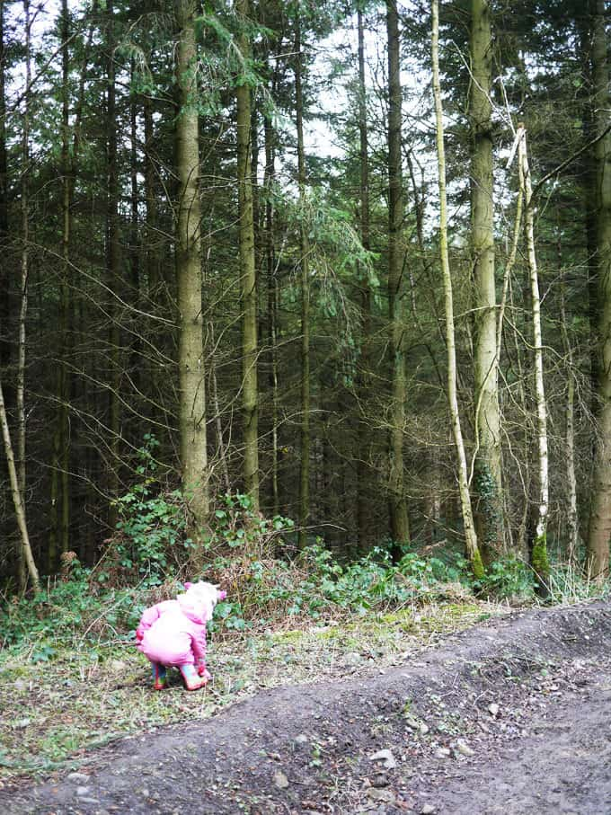 Wyre Forest Trees