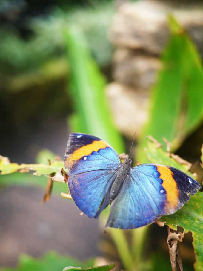 The Butterfly Farm, Stratford-Upon-Avon